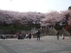 桜の木々って、一杯あり過ぎると、遠くから見た方が綺麗ではないですか?