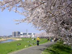 見事な桜の風景でした!