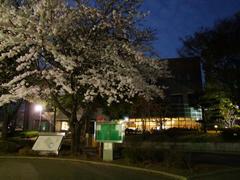 桜も満開だった千葉大学構内(奥に Colza があります)