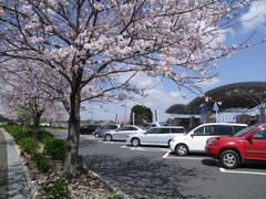 そういえば、桜が綺麗な時期でした