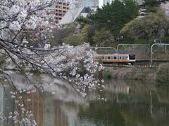 飯田橋駅~市ヶ谷駅付近の外堀の桜