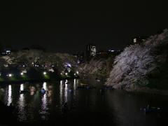 都内の桜の名所で有名な千鳥ヶ淵
