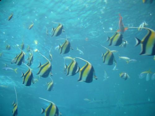 沖縄美ら海水族館の、かわいいお魚(笑)