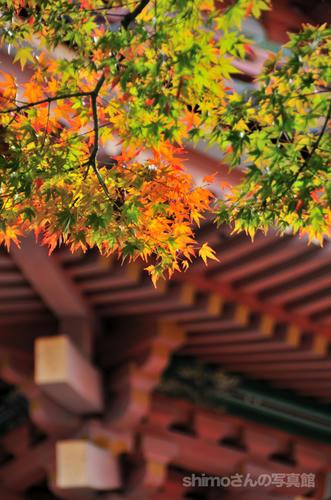 清水寺の紅葉02