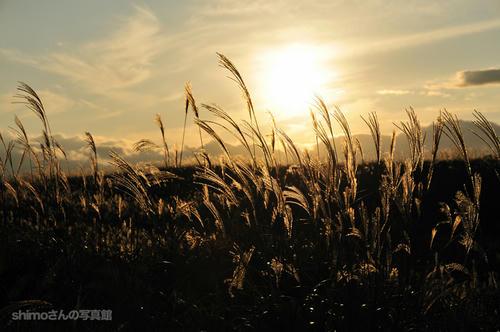 黄金色に輝く秋その1
