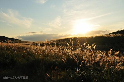 黄金色に輝く秋その2
