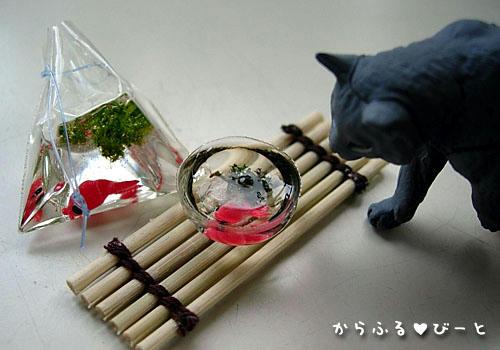 おや?金魚がいるぞ!