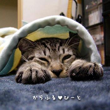 カゲトラの寝顔