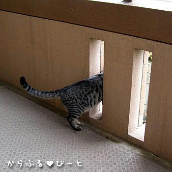 外を覗くカゲトラ
