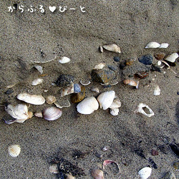 地層状に埋まる貝殻