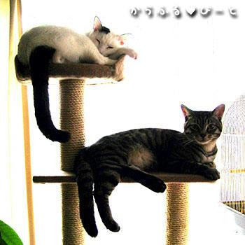 猫タワーで寛ぐ二匹