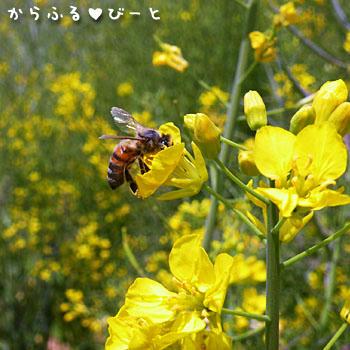 愛知牧場のミツバチ