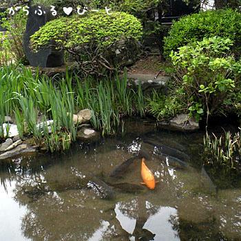 正願寺の池