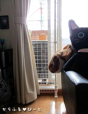 猫の脱走防止策(下部)