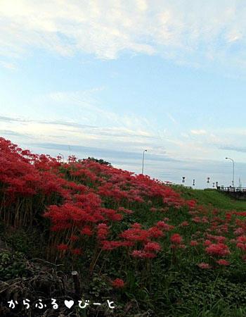 新川の土手に咲く彼岸花