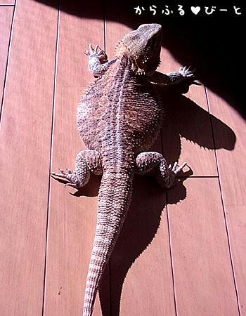 まるで恐竜!!