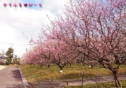 愛知県植木センター