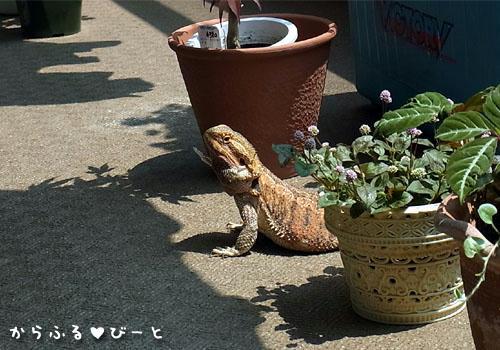 植木鉢と一緒に並ぶジャッキー