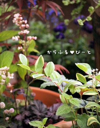 ベランダの植物達