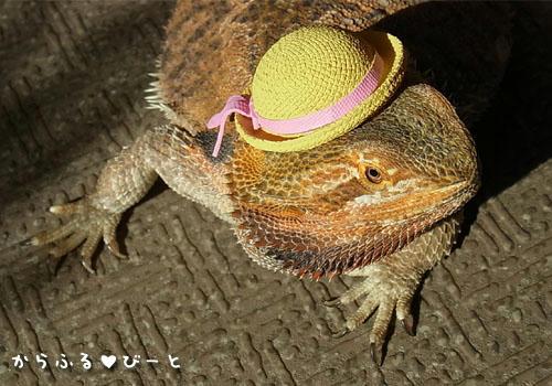 麦藁帽子でオシャレに♪