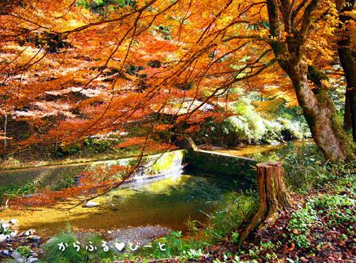 横谷峡の紅葉