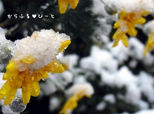 初雪2012