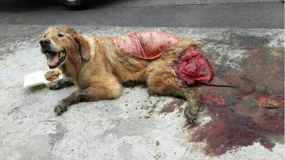犬肉,韓国,中国,朝鮮族,東南アジア,犬肉,犬喰い,猫肉,動物,犬猫,ペット,犬,猫,