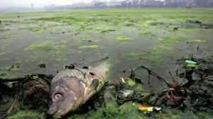pm2.5,中国,汚染,奇形,大気汚染,環境汚染,動物,障害,奇形,砂漠化,中国大陸,