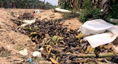 ラオス,バナナ,汚染,合成肉,インドネシア,細菌,中国産,中国人,環境汚染