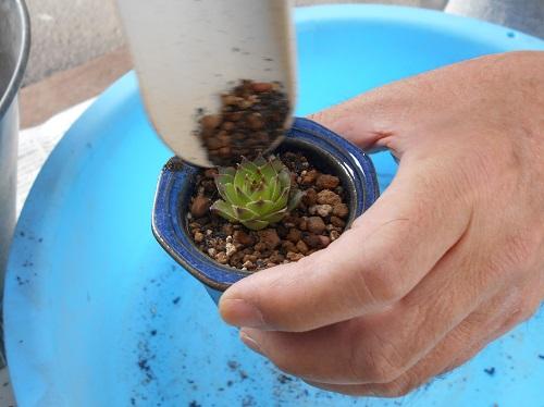 植木鉢は小盆栽用の鉢です