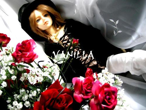 vanilla01c.jpg