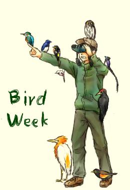 birdweek2.png