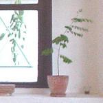 hyoro2007.jpg