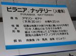 20141117d.JPG