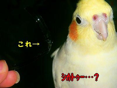 001_40001.jpg