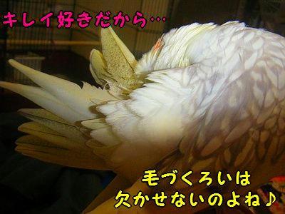 002_40002.jpg
