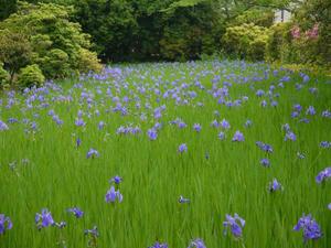 20110516大田神社