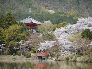 20110413大覚寺