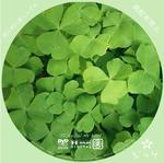 オリジナル緑 / LALA自作DVDジャケット