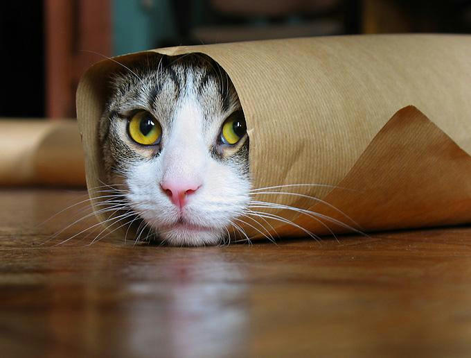 Cat rolled up in a piece of paper
