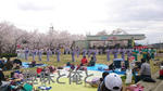 摂津峡さくら祭り