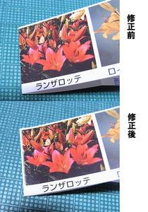 yuri05.jpg