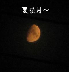 IMG20100720-n.jpg