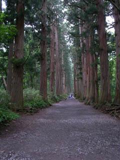 戸隠奥社の木立
