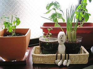 エティの家庭菜園