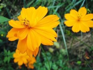 何故か花の写真
