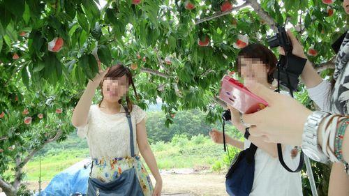 大玉甘い富士山富士五湖周辺人気おすすめ御坂の桃直売所