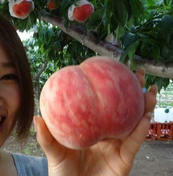 富士山富士五湖周辺人気おすすめ御坂桃の直売所お土産大玉甘い
