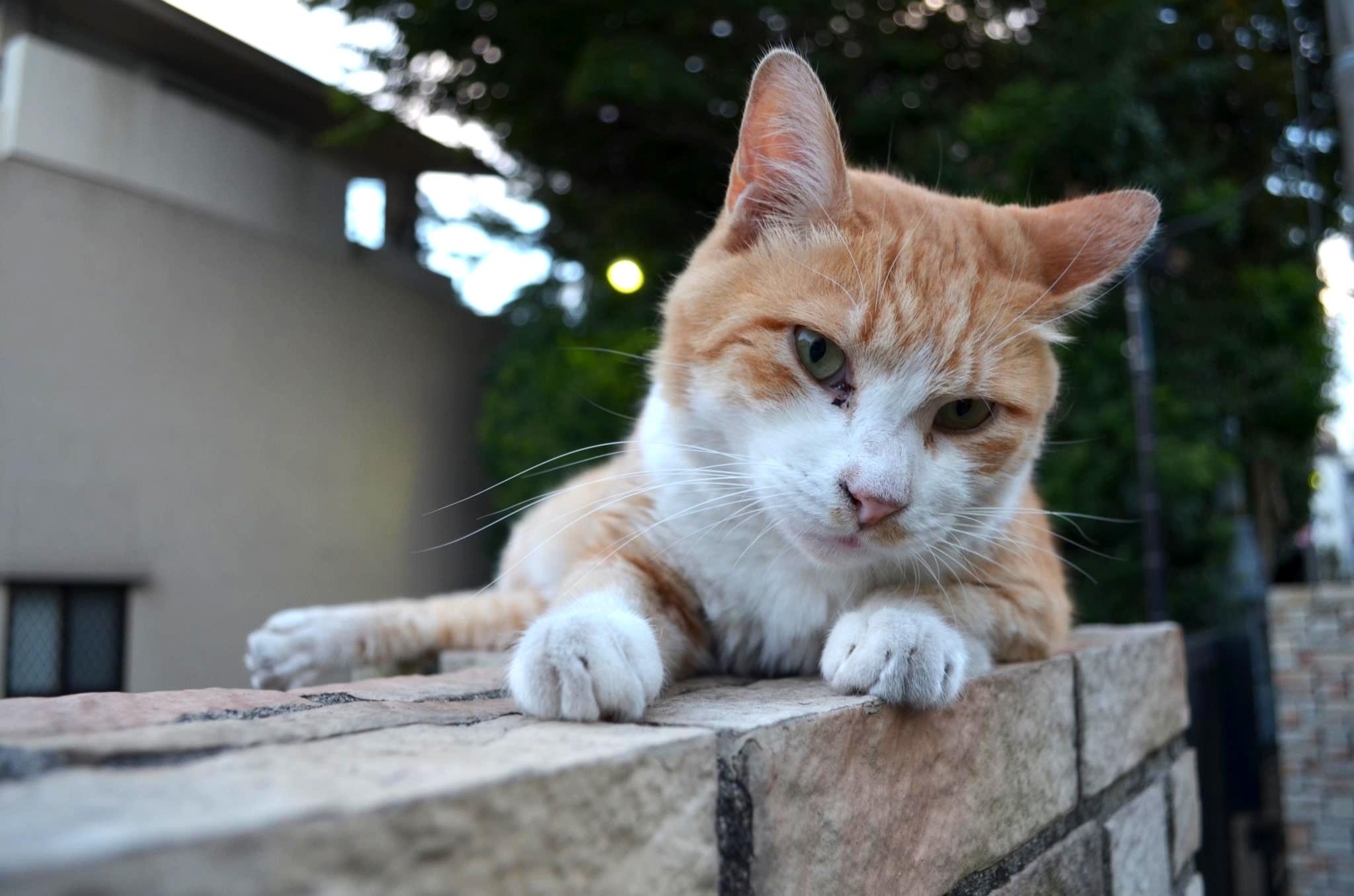 近所の子(猫)