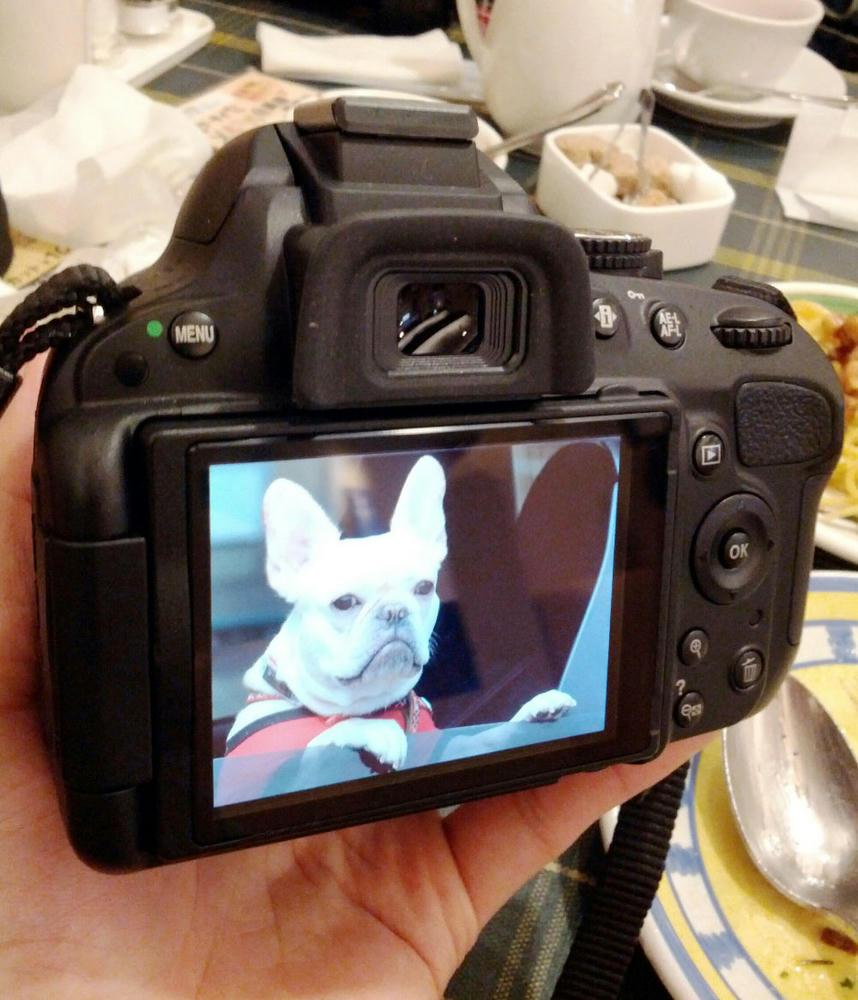カメラ目線